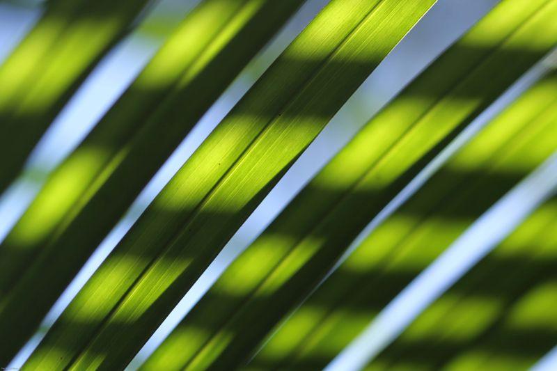 Macro of palm